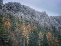 Frostgrenze  -- Frostgrenze